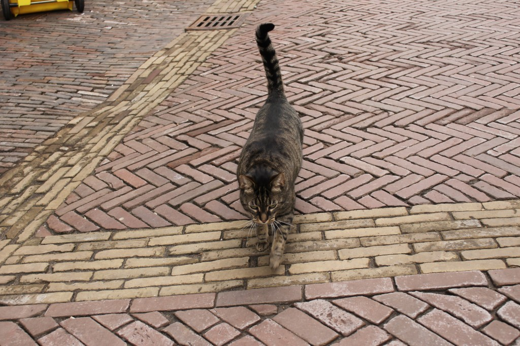 Haarlem kitty